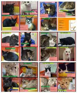 FOUND CATS @ CAT HAVEN from country & city areas Perth Region Preview