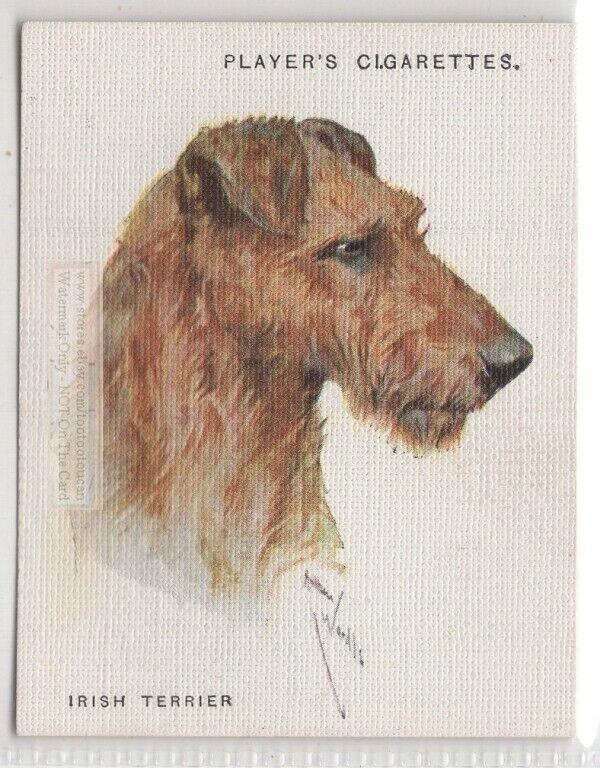 Irish Terrier Dog Canine Pet 1920s  Ad Trade Card