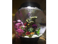 Biorb Halo 30 All in one Fish Tank with Fish
