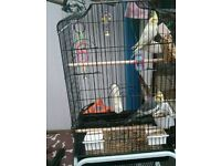 Wanted bird cage
