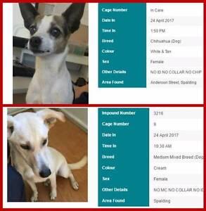 FOUND pets - GERALDTON & surrounding areas Geraldton Region Preview