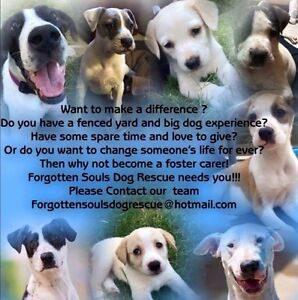 FOSTER HOMES NEEDED FOR LARGE BREED RESCUE DOGS Sydney City Inner Sydney Preview