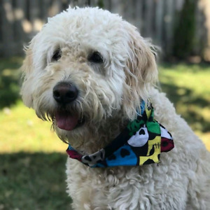 dog walker in Hamilton  and Ancaster!