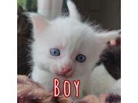 6 cute friendly playful kittens