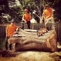 Seeking Full-Time Arborist