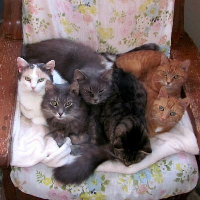 FOR SALE:CAT URINE & ODOR REMOVAL RECIPE~CATS_MEOW_ANTIQUES_CAT_RESCUE