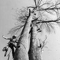 Tree Care Services, Arborist, Tree Removals, Pruning - HPM