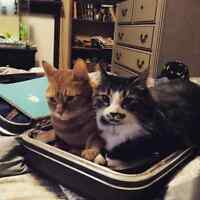 Best cats ever. Need a loving home
