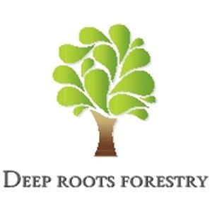 Woodlot & Tree services offered