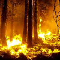 Forest Fires are Raging, Join our team, Immediate openings