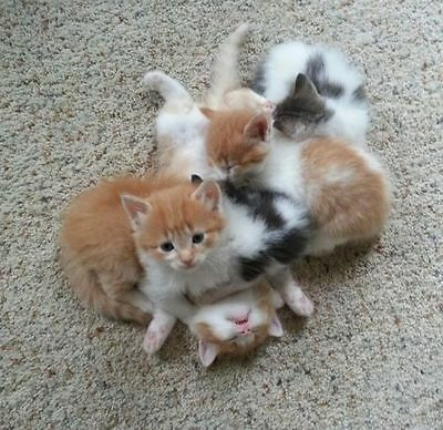 FOR SALE: THE BEST CAT URINE REMOVAL RECIPE~Help Feed RESCUED Cats&Kittens~