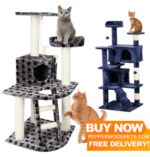 NEW Cat Scratcher, Cat Gym, Cat Condo, Cat Tree, Scratching Post!