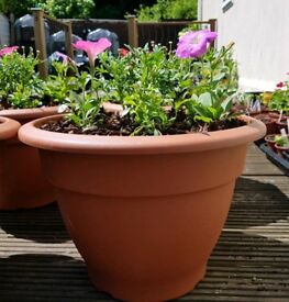 Terracotta plastic pot with plants. New. Hurley. Maidenhead