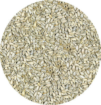 Sunflower Kernals 500g Sunflower Hearts Garden Wild Bird Seed Seeds Food Feed