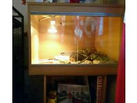 2ft Vivarium excellent condition with light fitting and thermostat