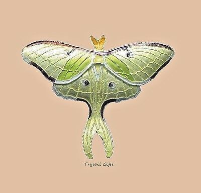 LUNA MOTH Cloisonne PIN by Bamboo Jewelry Enamel STERLING Silver - Gift Boxed