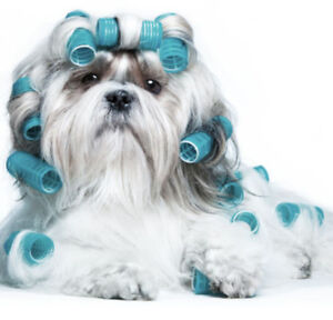 Grooming courses kijiji buy sell save with canadas 1 local dog grooming course solutioingenieria Gallery