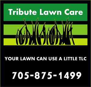 Leaf Clean Up and Removal By Tribute Lawn Care Peterborough Peterborough Area image 1