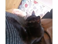 Female 3yr old cat lookin 4 her forever new home