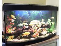 Complete FLUVAL tropical fish tank aquarium with cichilds fishes