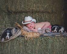 5 BORDER COLLIE PUPS Ravenswood Charters Towers Area Preview