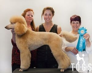 Dog Groomer with Experience