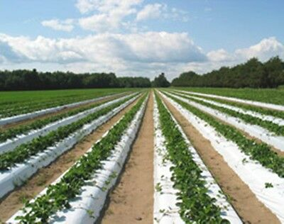 "Plastic Mulch Row Cover 48""x1750ft 1.25mil White & Black Weed Barrier Strawberry"