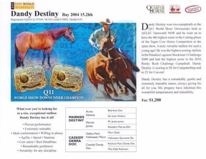 Lot of 5 registered quarter horses 3 mares and 2 geldings