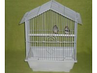 Zebra finches with cage