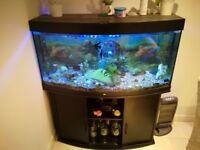 Jewel 260L Aquarium
