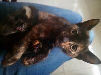 Kitten ready gto go new home