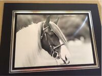 Rare opportunity to buy stunning gypsy cob