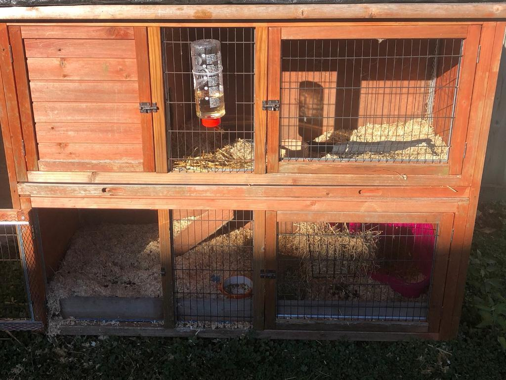Rabbit Guinea Pig Hutch And Run In Towcester Northamptonshire