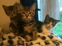Kittens - Ready to go