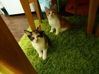 Male And Female Kittens For Sale