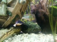 Chiclids and more for sale