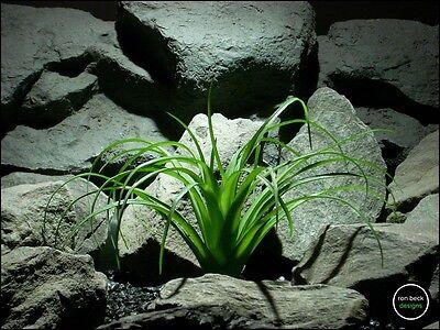 faux reptile terrarium plant | ponytail palm from ron beck designs. prp199
