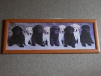 Labrador Puppies Framed Picture