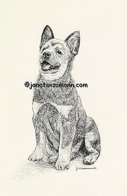 New ART PRINT - AUSTRALIAN CATTLE DOG Blue Red Heeler drawing picture painting