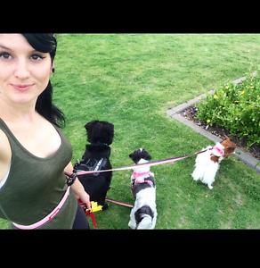 Alodie's Dog walking Baldivis Rockingham Area Preview