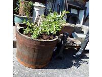 Fantastic Oak Barrel Planter Planted with a shrub Last One