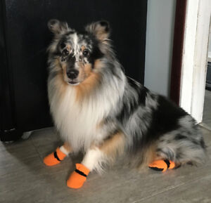 Fleece Dog Boots, Coats & Kennel mats