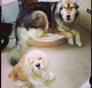 Dog Walker / Runner