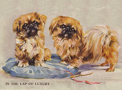 """PEKINGESE CHARMING DOG GREETINGS NOTE CARD TWO CUTE DOGS """"IN THE LAP OF LUXURY"""""""