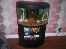 80 CM TANK WITH STAND. ALL ACCESSORIES AND FISH.