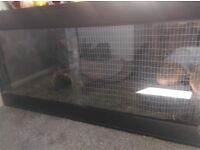 Large tortoise tank or small pet cage