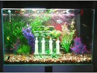 120l fish tank aquarium