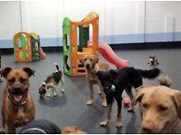 Carefree Canines - Dog Day Care Centre, Dog Shop, Dog Training Prestonpans