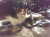 Rehoming two family cats