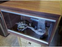 Vivarium and accessories for small reptile